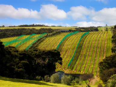 Stunning Vineyard  Business  for Sale