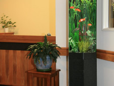 Aquarium Rental Franchise for Sale Auckland South and East